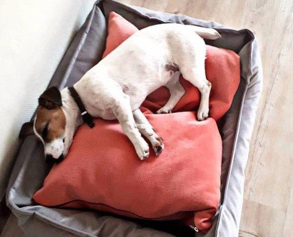 Важно обустроить место для отдыха своей собаке, где ее никто не будет беспокоить