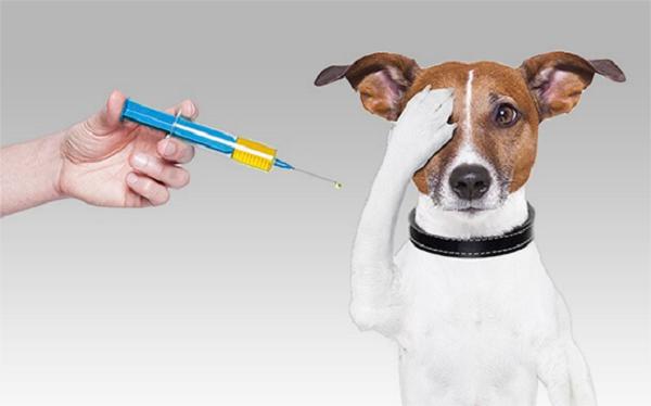 Прививки этим собакам ставятся такие же, как и остальным
