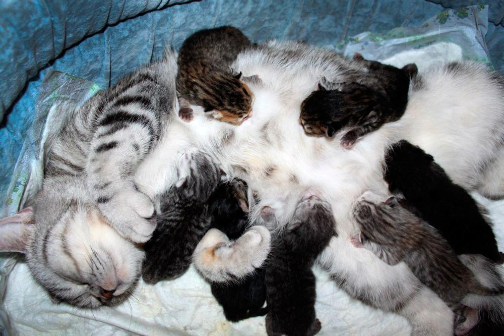 В первые дни после рождения котятам нужны только тепло и еда