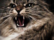 Усы чутко реагируют на отрицательные электрические заряды, возникающие при поглаживании кошки против шерсти