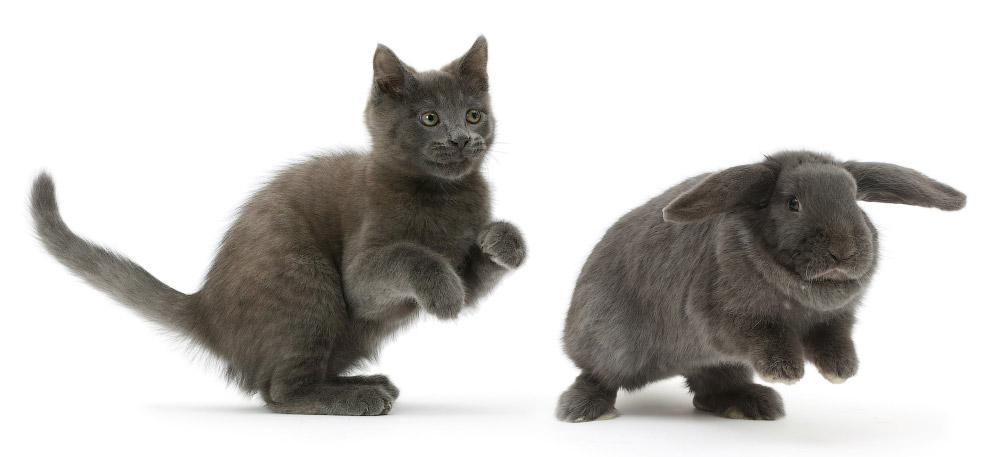 Кот может поранить кролика в игре.