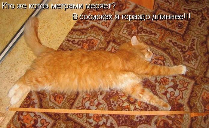 Измеряем длину тела подросшего котёнка