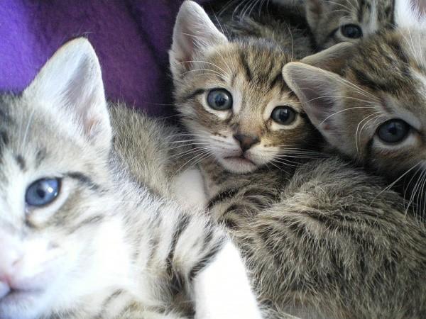Данное лекарственное средство является одним из самых безопасных, поэтому его часто прописывают котятам