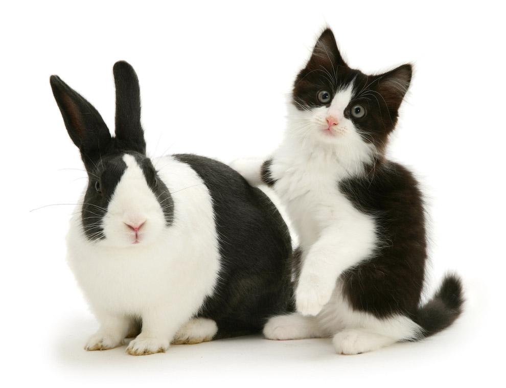 Животные проявляют друг к другу интерес и играют вместе