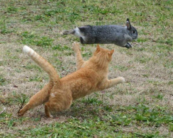 У некоторых котов очень развит охотничий инстинкт