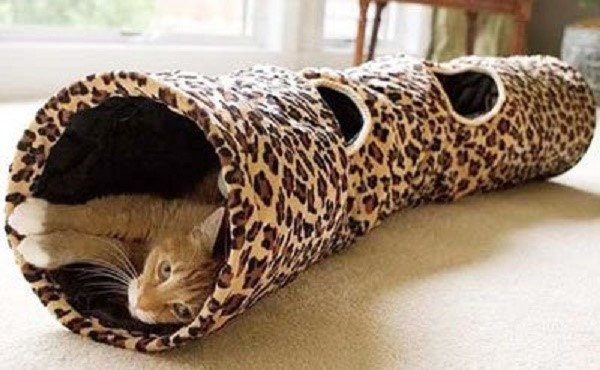 Кошка - потомок больших хищников, и добыча еды в игровом формате может повысить тонус всех систем ее организма