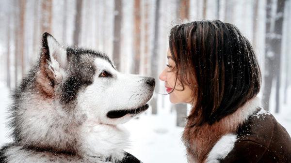 Чумка не передается от собаки к человеку