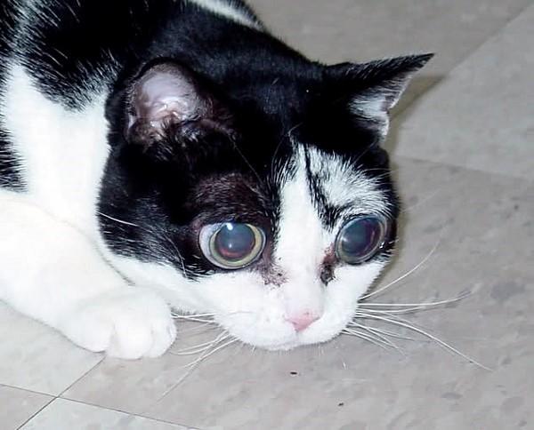 У этого животного поражены заболеванием оба глаза