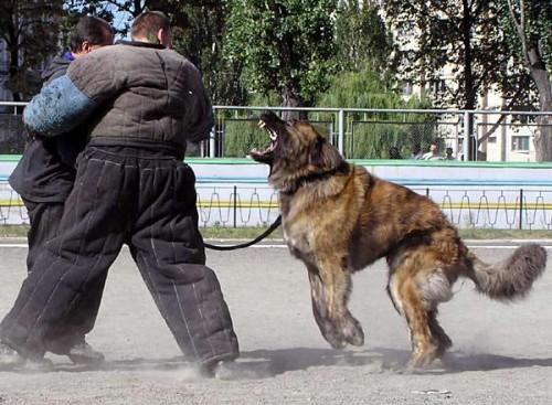 Тренировка с инструктором