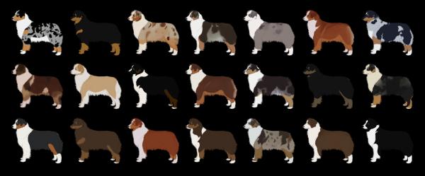 Животные могут быть окрашены по-разному