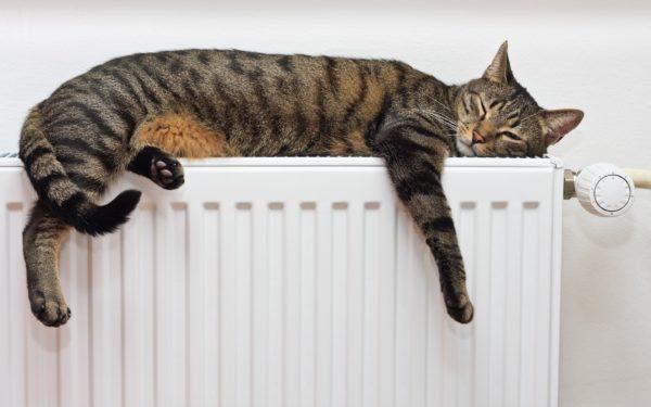 Зимой желательно использовать в помещении увлажнители воздуха