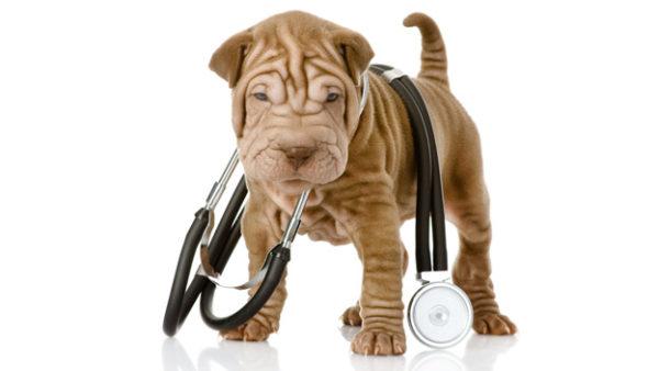 Чтобы животное перестало бояться тонометра, лучше всего проводить измерение давления не менее 3 раз подряд