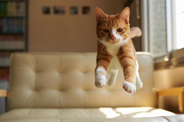 Если вовремя прыжка кошка не потеряла равновесие, то с ней все в порядке