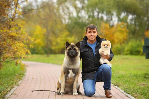 Управлять такой собакой и стать ей не только хозяином, но и другом, может только опытный собачник