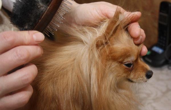 После сушки необходимо расчесать собаку специальной щеткой