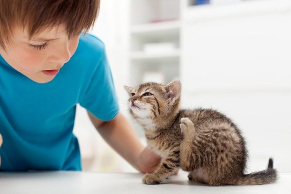 Кошачий дерматит не передается человеку