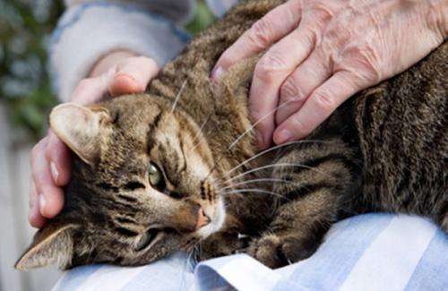 Массаж - отличное средство, работающее в качестве эффективной физиотерапии, позволяющее снизить боли и усилить приток крови к поврежденным областям