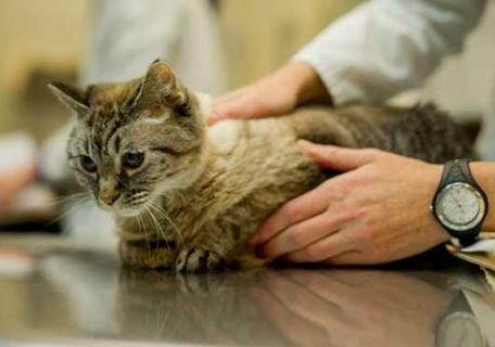 Диагностику должен проводить ветеринарный врач
