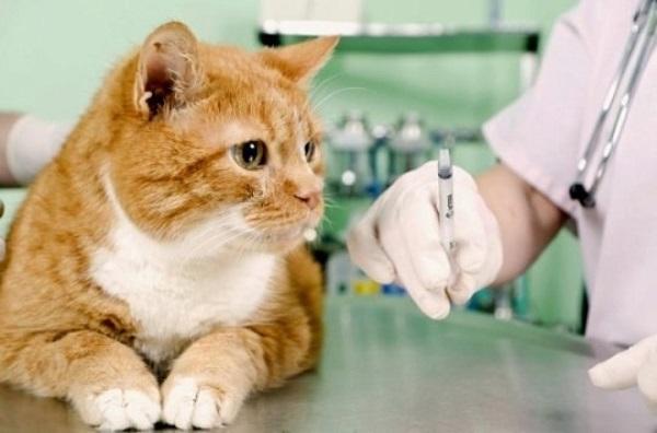 Проводить лечение может только ветеринарный врач