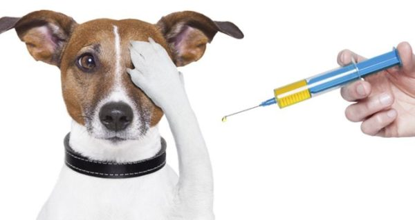 Особей, вступавших контакт с инфицированным животным, также необходимо подвергнуть обработке