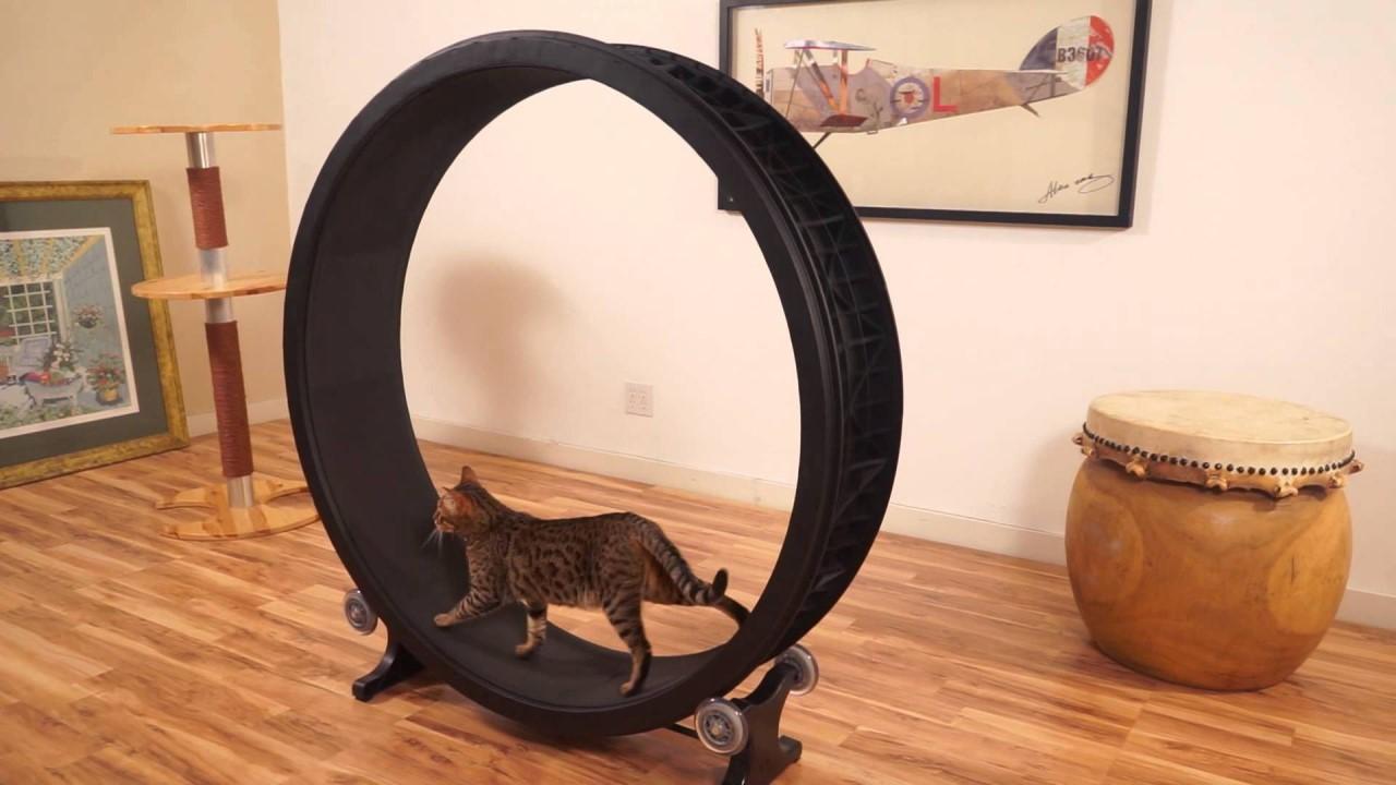 Беговое колесо для кошек — дополнительные физические нагрузки