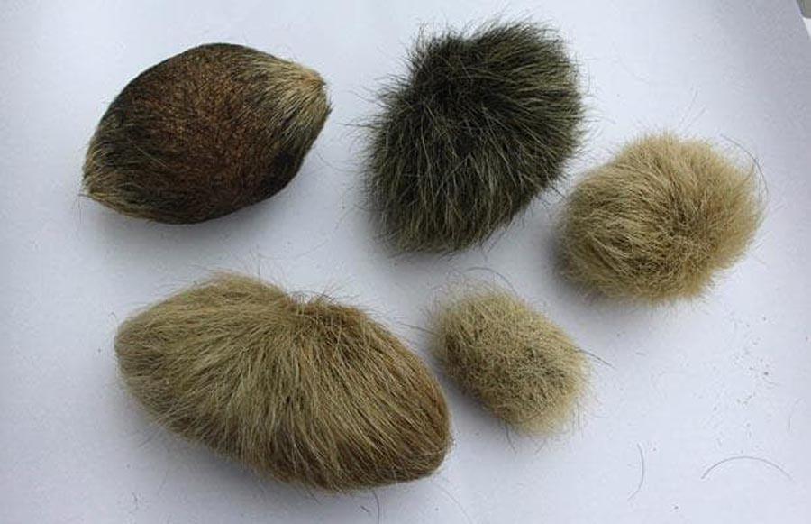 Без дополнительной помощи травы и специальных паст ЖКТ кота может не справиться с шерстяными комками