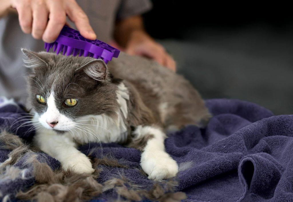 Благодаря линьке шерсть у кошек сохраняет свой достойный внешний вид до старости