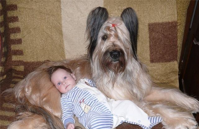 Бриары прекрасно ладят с детьми