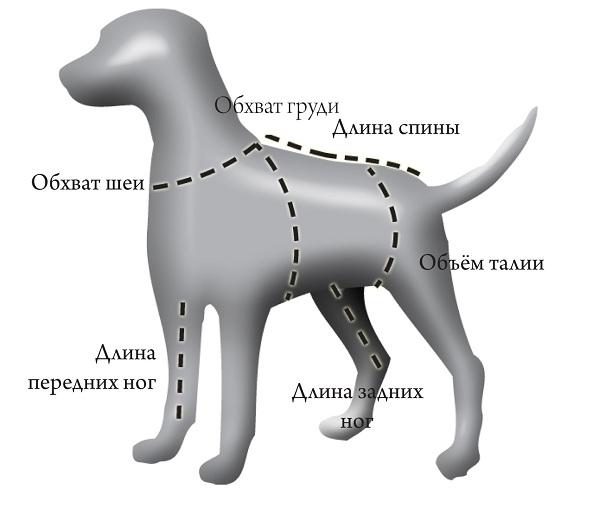 Важные замеры для пошива одежды собаке