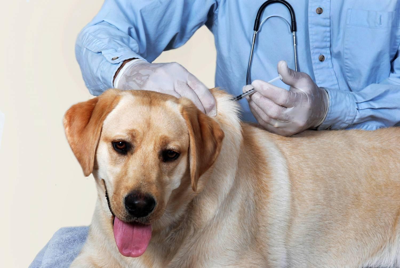 Вакцинация делается с учетом возраста собаки