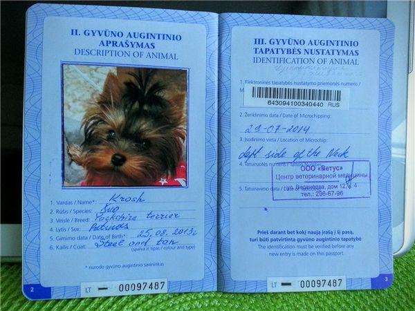 Ветеренарный паспорт для собак