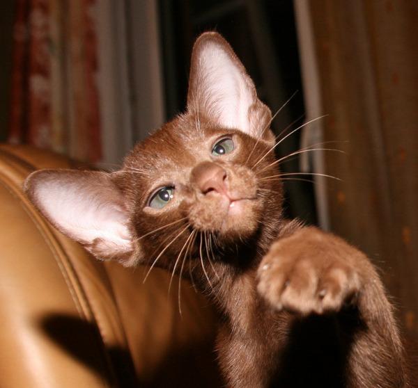 Взаимная любовь поможет кошке прожить счастливую жизнь