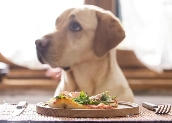 Внезапные перемены рациона могут закончится испорченным пищеварением собаки