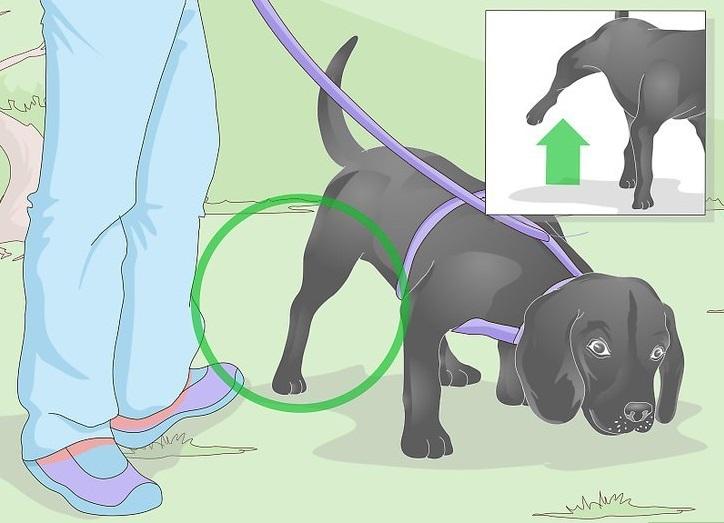 Внимательно наблюдайте за псом на прогулке