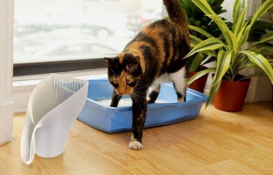 Во время восстановления кот может на время отказаться от лотка из-за неудобств при использовании