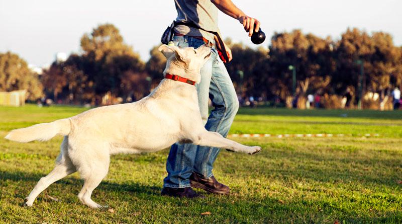 Во избежание сосредоточения собаки на поисках пищи во время прогулки, займите ее активными играми