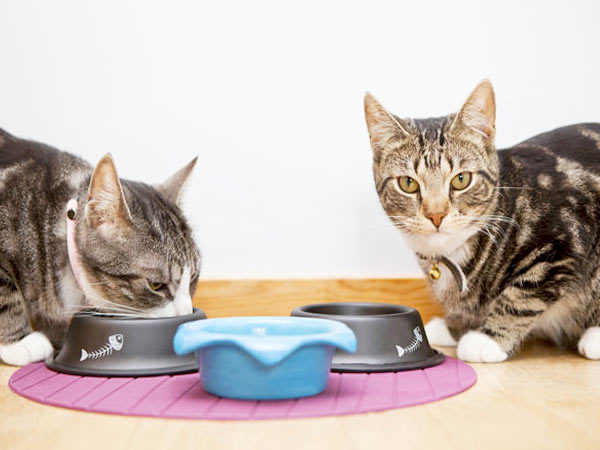 Во избежании конфликта между кошками - у каждой своя миска