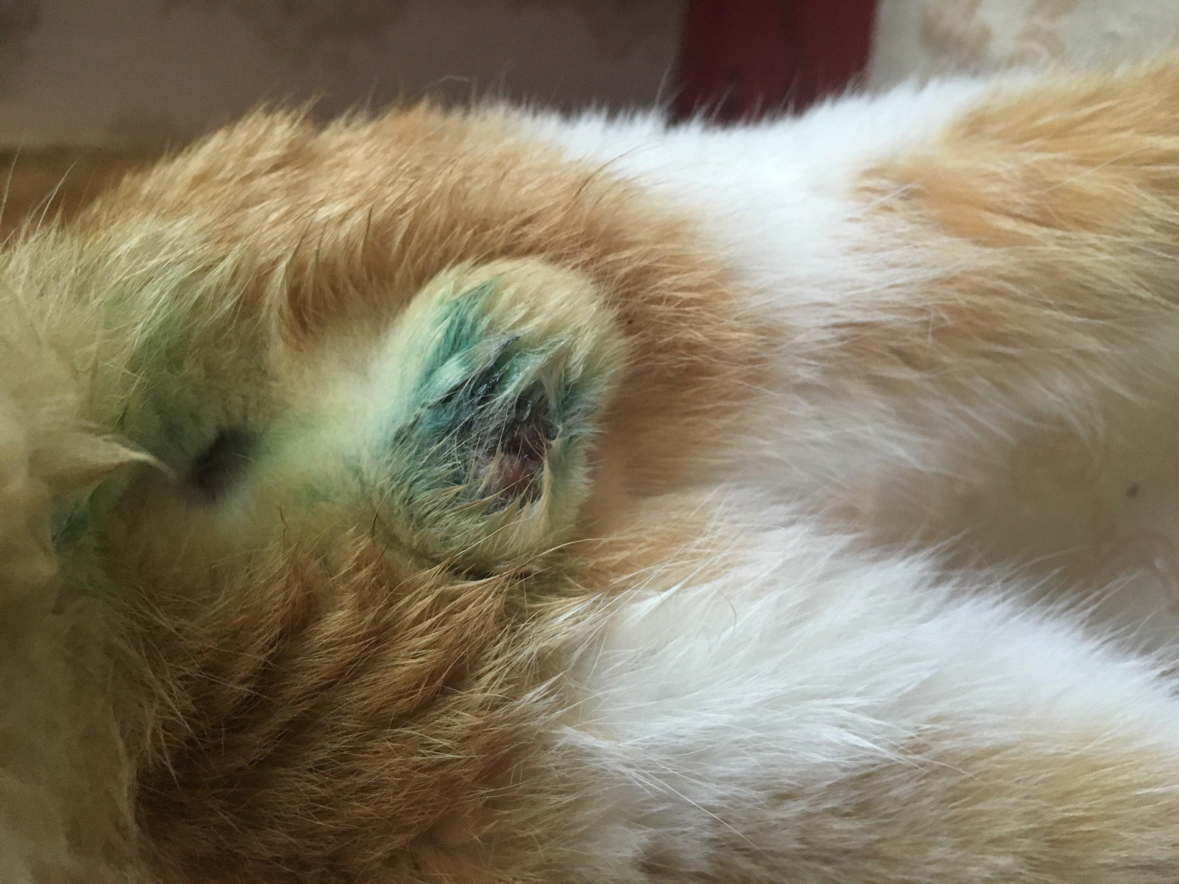 В большинстве случаев повторная обработка зеленкой заживающей раны не требуется