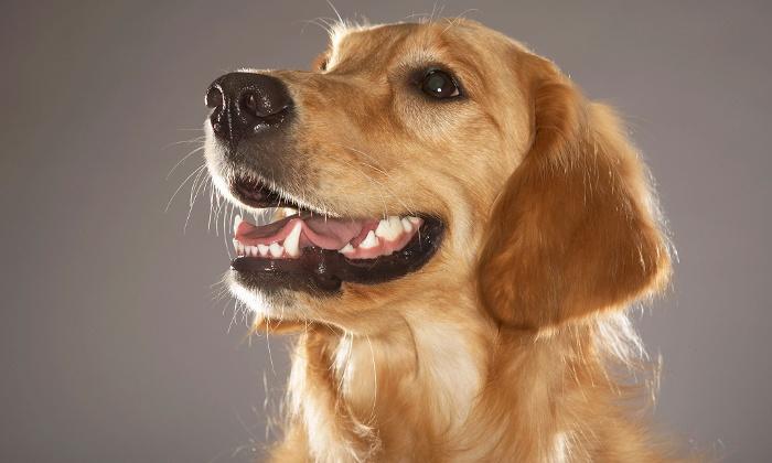 Гастрит у собаки: какое лечение выбрать