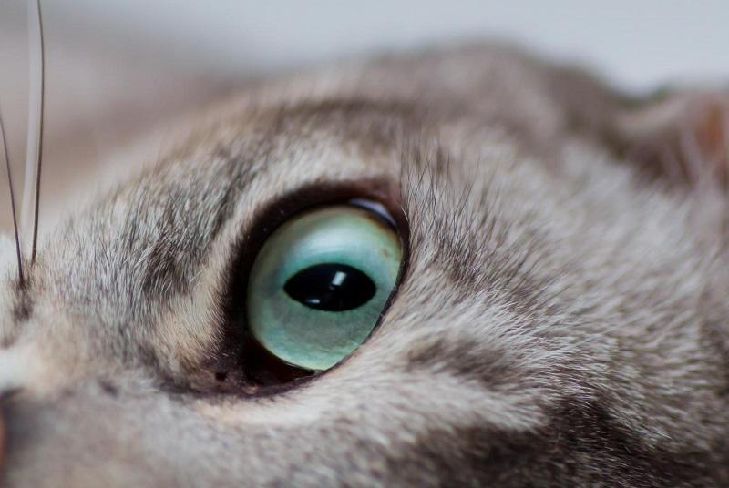 Глаза всегда имеют черную подводку