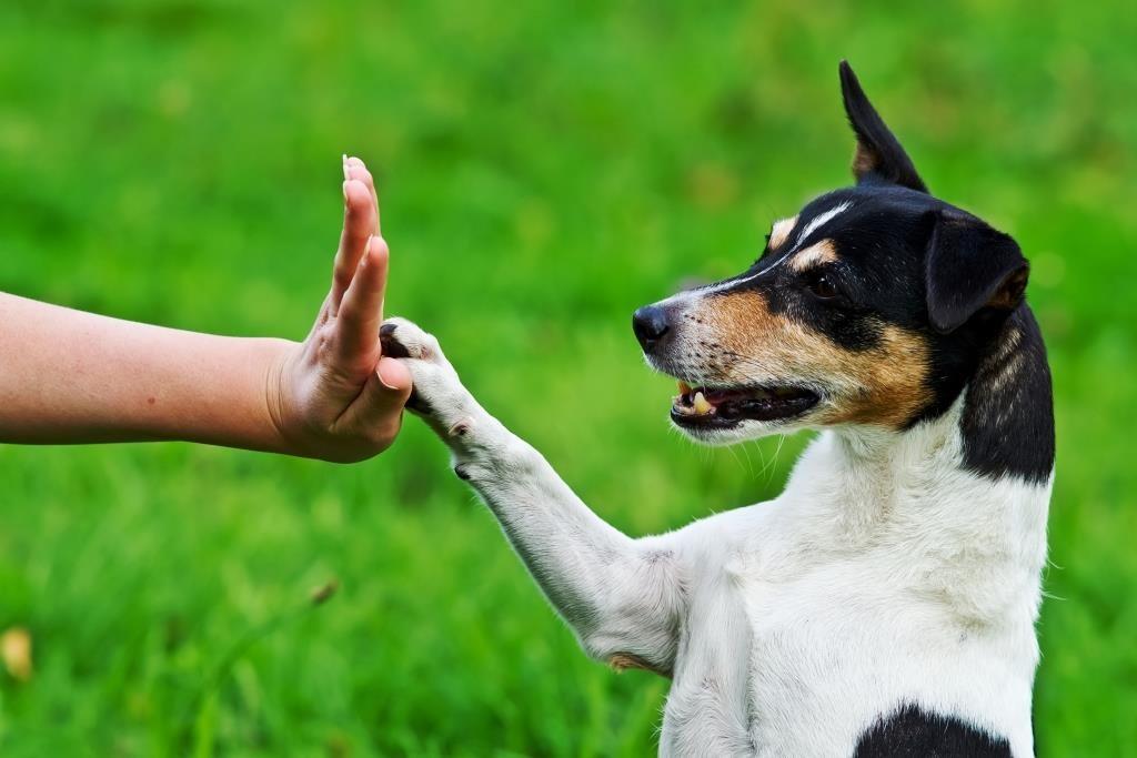 Гораздо проще развиваться нужные привычки у питомца, с которым уже найден общий язык
