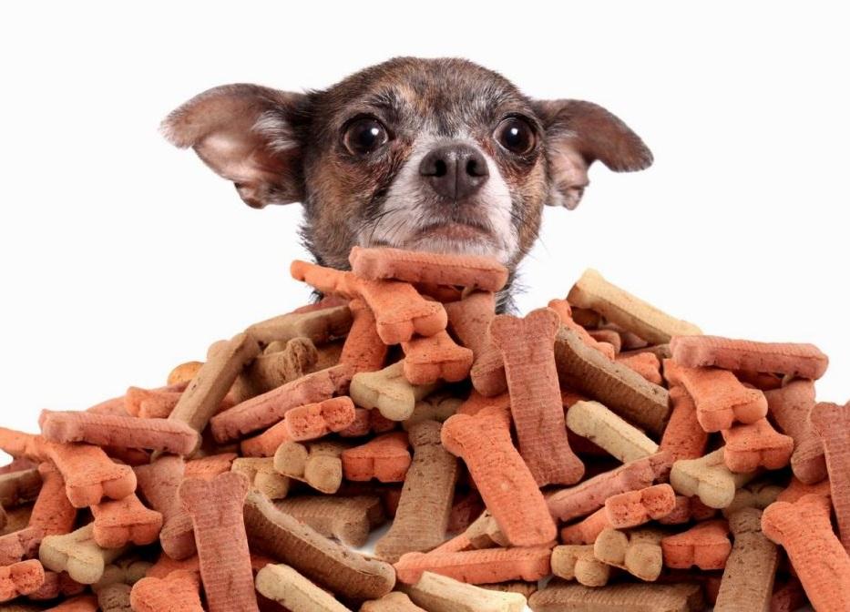 Давая собаке лакомство, важно знать меру, в противном случае оно потеряет свою действенность