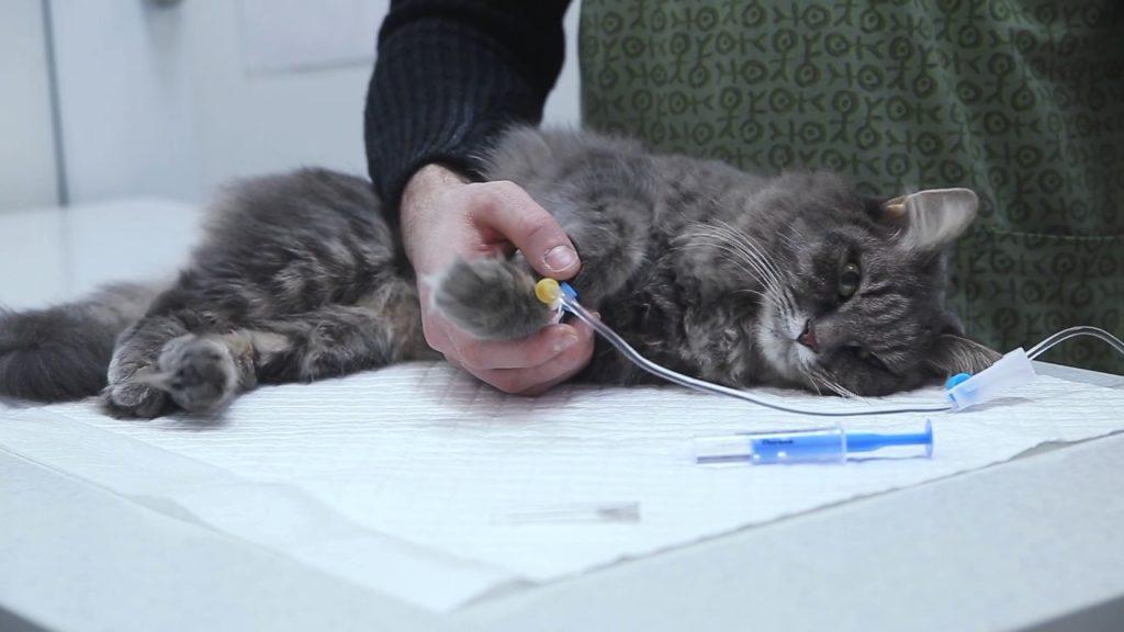Длительность пребывания кота в клинике зависит от его состояния здоровья и от возможностей хозяина