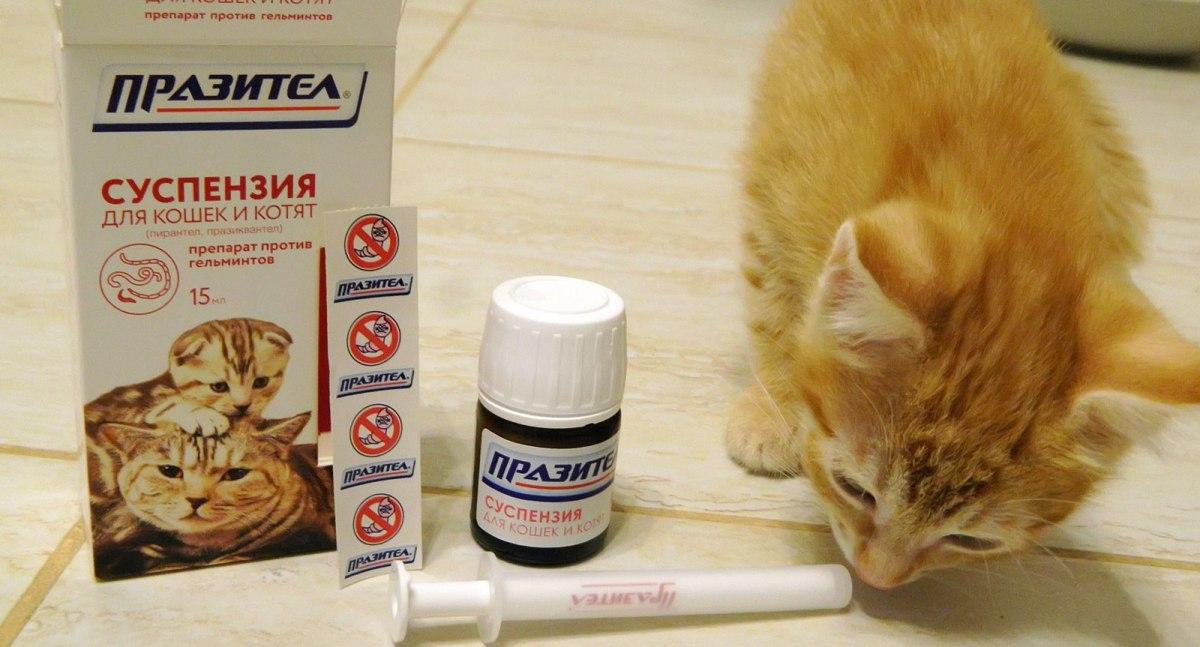 Для дегельминтизации котов важно правильно выбрать подходящий препарат