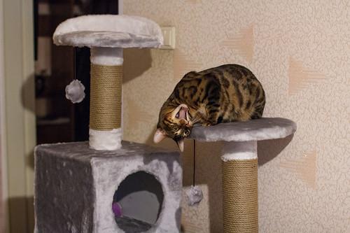Домик для бенгальской кошки