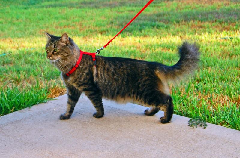 Если вы выпускаете кошку на улицу, вероятность ее заражения ушным клещом повышается