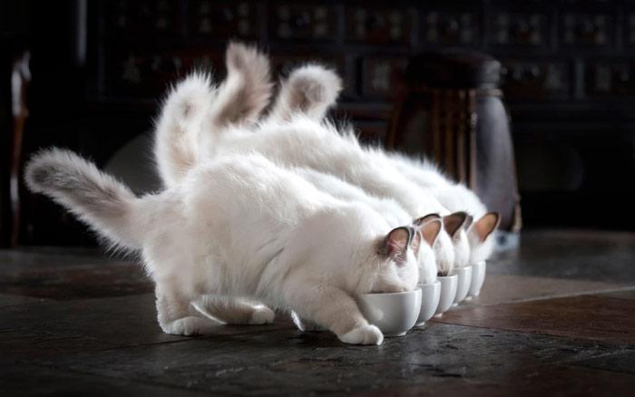 Если в доме несколько кошек, задача усложняется