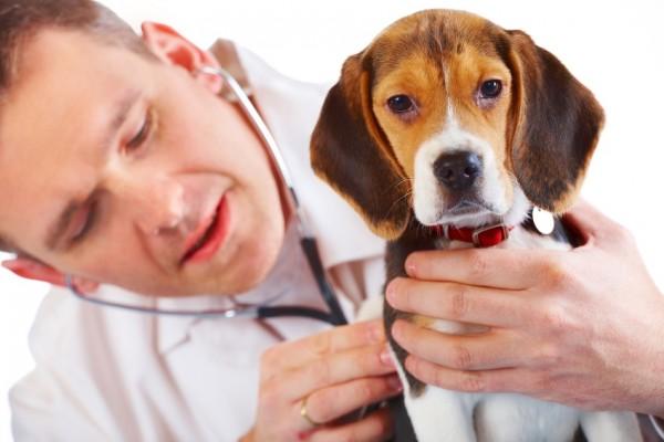 Животные, содержащиеся в питомниках, имеют большие риски заражения бурцеллезом