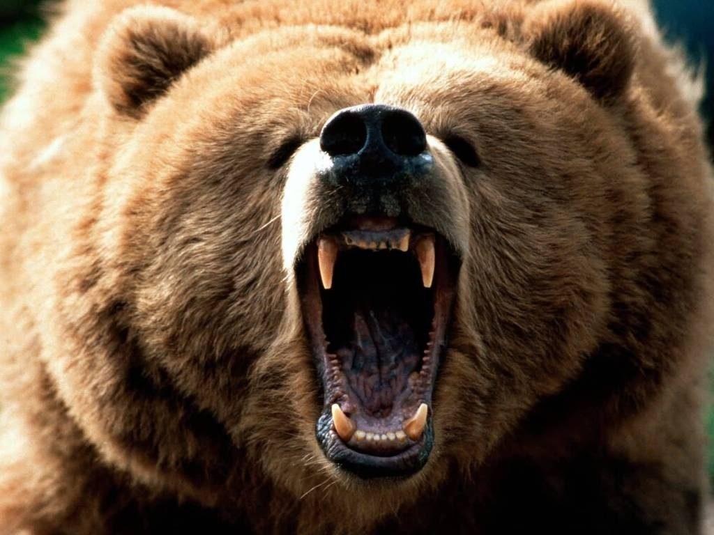 Животные чуют запахи своих сородичей на дальних расстояниях, и избегают встреч с сильными особями