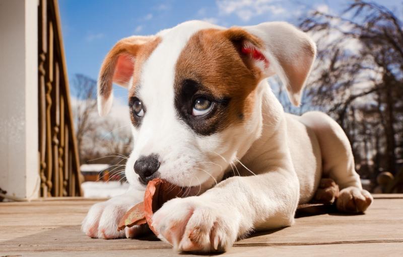Занимаясь воспитанием щенка, не забывайте о периодических вознаграждениях